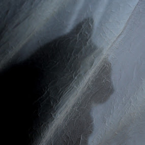 Black Cat in White Linen by Brent Monique Makenzie Moran - Animals - Cats Portraits ( canon, eos, cat, 70d, black and white, pet, white, feline, domestic, black,  )