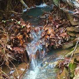 Babbling brook  by Amanda Burton - Nature Up Close Water ( water, nature, creeks )