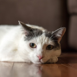 Our 4 Legged Family Member by Mick Frey - Animals - Cats Portraits ( cat, cute, kasper, domestic cat )