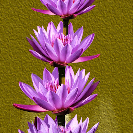 flowers by Jaysinh Parmar - Digital Art Abstract