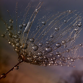 The Morning Will Change Everything by Marija Jilek - Nature Up Close Natural Waterdrops