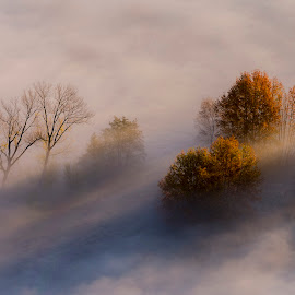 Trees in the mist by Pietro Ebner - Nature Up Close Trees & Bushes ( foggy, tree, autumn, fog, fall, trees, mist,  )