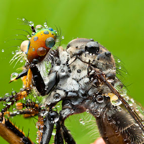 After rain by ธเนศ ขวยไพบูลย์ - Animals Insects & Spiders ( canon, macro, 7d, insect )
