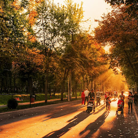 sunday in park by Cornelius D - City,  Street & Park  City Parks