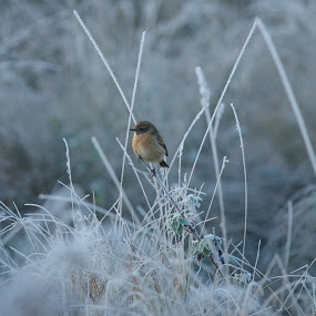 Cold feet by Graham Coulson - Animals Birds