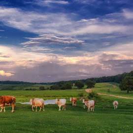 Sunset by Marcel Socaciu - Landscapes Mountains & Hills ( countryside, clouds, animals, grass, sunset, lake, road, cows )