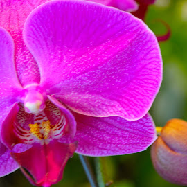 by Ulil Herdianto - Nature Up Close Gardens & Produce