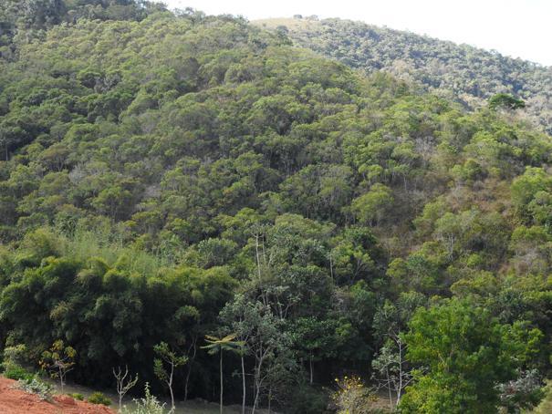 Fazenda / Sítio à venda em Secretário, Petrópolis - RJ - Foto 7