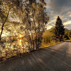 First light by Rune Askeland - Landscapes Sunsets & Sunrises ( jølster, trees, sunrise, road, norway )