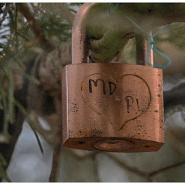 Tree Lock  by Lorraine D.  Heaney - Artistic Objects Other Objects