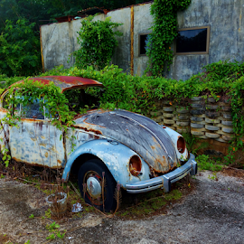 VW by Wiley Duckett - Transportation Automobiles (  )