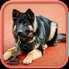 Fantastic Police Dog