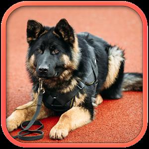 Cover art Fantastic Police Dog