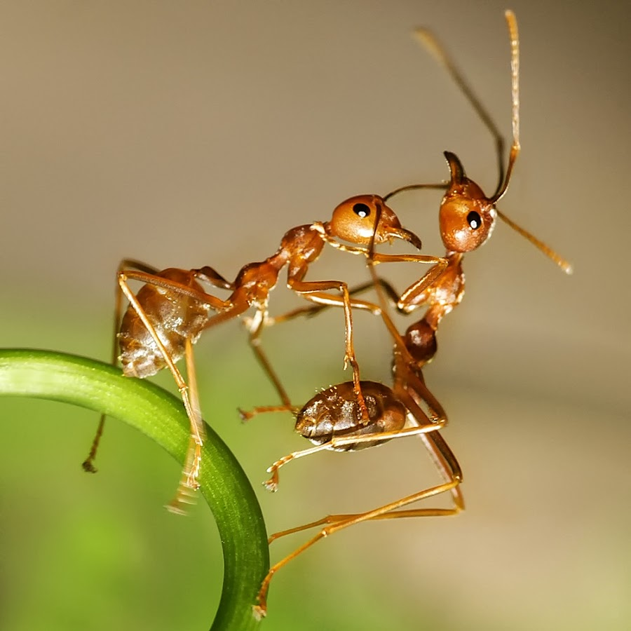 engaged by Patricius Hartono - Animals Insects & Spiders