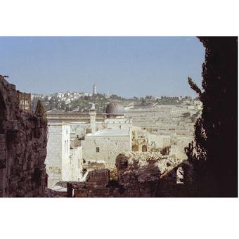Michele Cirillo, Palestine 5