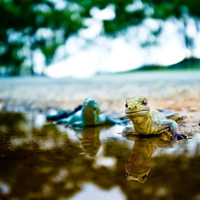 Creatures in puddles by Laurie King - Animals Reptiles ( reptiles, queensland, puddles, australia, toys, reflections, landscape )