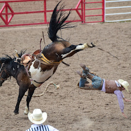 by Terry DeMay - Sports & Fitness Rodeo/Bull Riding