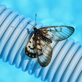 Rescued by Carole Walle - Animals Insects & Spiders