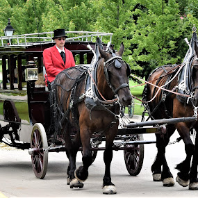 Carriage Ride on Macinac Island by Lorna Littrell - People Street & Candids ( carriage, carriage ride, candid, street scene, people, people at work, street photography,  )