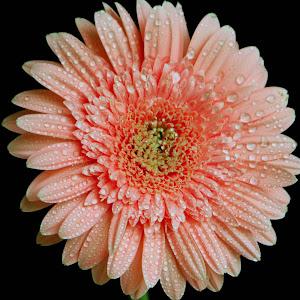Fresh Flower.jpg