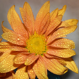 Gold And Yellow by Millieanne T - Flowers Single Flower