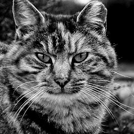 *** by Jurijs Ratanins - Instagram & Mobile Android ( look, mobilography, cat, portrait, animal )