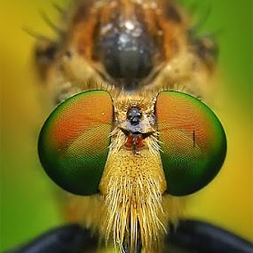 Potrait by Setiady Wijaya - Animals Insects & Spiders