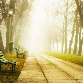 Carol park by Mikaela Dana - City,  Street & Park  City Parks ( winter, benches, park, fog, january, outdoor, trees, nikon, misty, alley )
