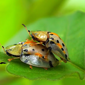 a witness by Anif Putramijaya - Animals Insects & Spiders