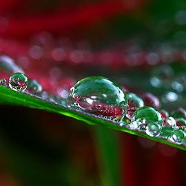 Waterdrops  by Asif Bora - Nature Up Close Natural Waterdrops