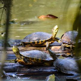 by Jeanne Knoch - Animals Amphibians