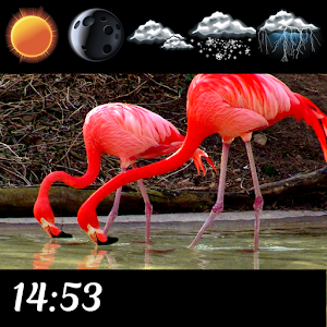 Download Flamingo Clock And Weather For PC Windows and Mac