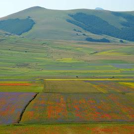 Castelluccio 11 by Bruno Brunetti - Landscapes Prairies, Meadows & Fields ( colors, flowers, italy, castelluccio, fields,  )