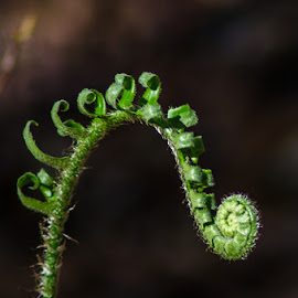 by Tony Cox - Nature Up Close Other plants