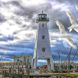 Added 3 Gulls by Will McNamee - Digital Art Animals ( aundiram@msn.com, danielmcnamee@comcast.net, mcnamee2169@yahoo.com, ronmead179@comcast.net )