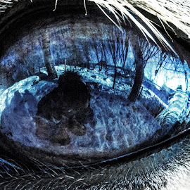 looking back by Joel Hast - Animals Horses ( reflection, blue, horse, snow, blue eye, eye,  )
