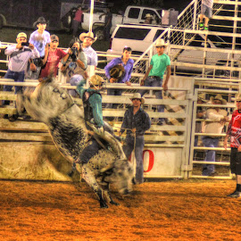 by Steve Tharp - Sports & Fitness Rodeo/Bull Riding