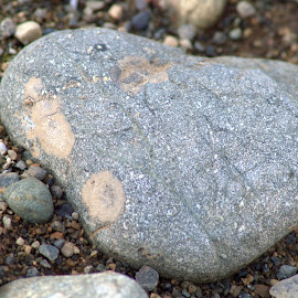 Heart of Stone by Rebecca Weatherford - Novices Only Macro ( macro, nature, heart-shape, stone, nikon, rocks, friend )