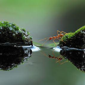 Crossing by Said  Ikhsan - Animals Insects & Spiders ( macro, nature )