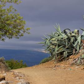 Going down the hill by Nico Kranenburg - Landscapes Travel ( hill, tree, chefchaouen, parh, marokko,  )