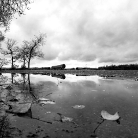 Fall  by Todd Reynolds - Black & White Landscapes