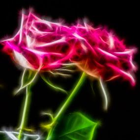 Flowers by Benny Høynes - Digital Art Abstract ( red, art, flowers, digital, filter,  )