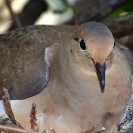 Nesting  by Larry Bidwell - Animals Birds