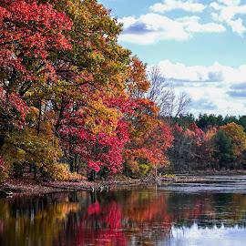 by Sue_ Duq - Landscapes Forests
