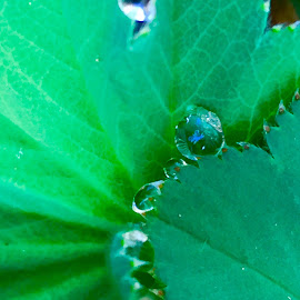 Blue Centre by Debbie Squier-Bernst - Nature Up Close Natural Waterdrops (  )
