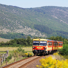 117-245 by Nagy Attila - Transportation Trains ( 117, bzmot )