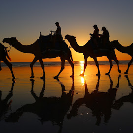 Camels at Cable Beach at sunset  by Zoe Vaughan - Landscapes Sunsets & Sunrises
