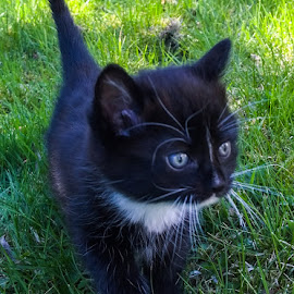 by Anngunn Dårflot - Animals - Cats Kittens