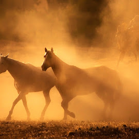 by Susan Byrd - Animals Horses
