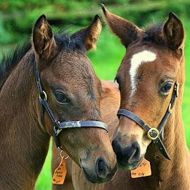 by Carmel Casey - Animals Horses